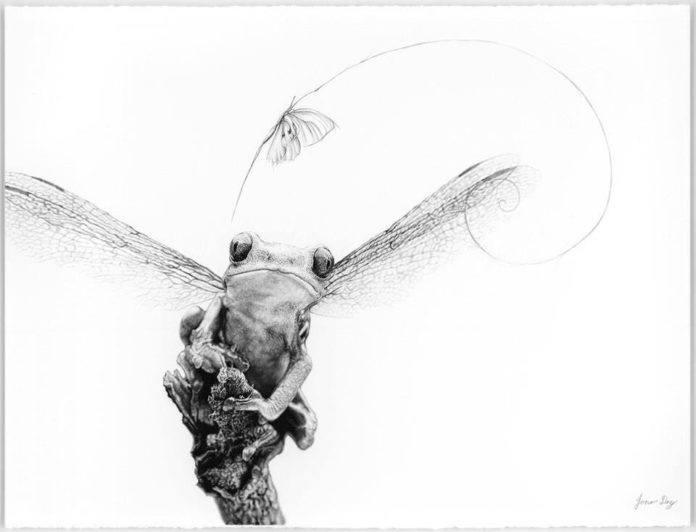Fairy frog jono dry photorealistic pencil drawings