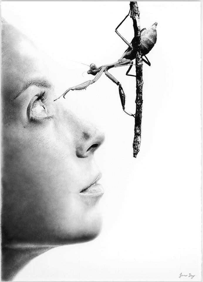 Praying mantis women jono dry photorealistic pencil drawings