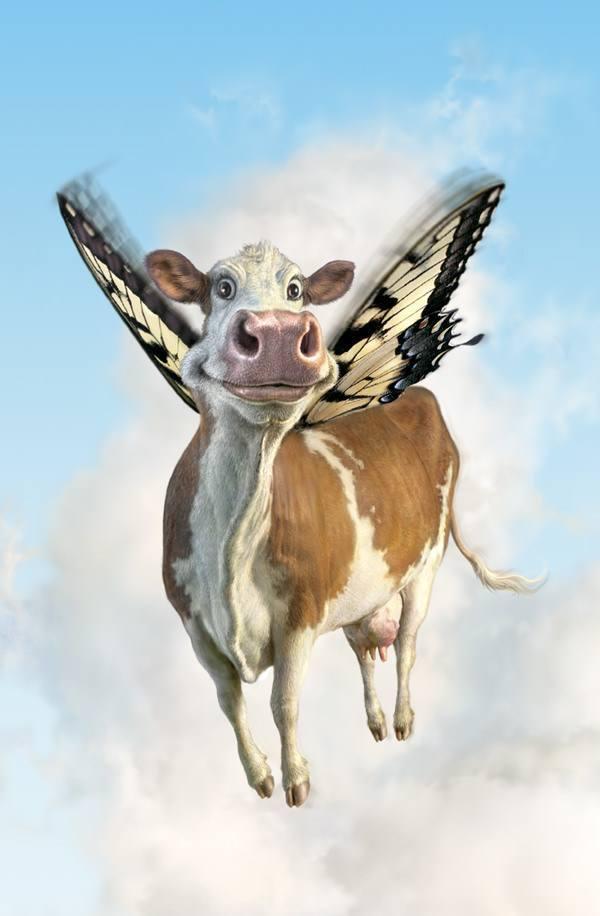fredrickson butterfly cow flying humor funny art illustration