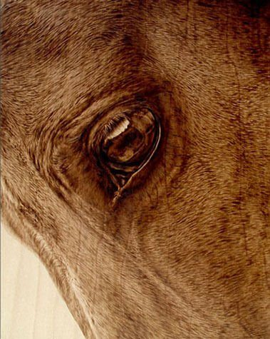 A horse's eye reflects scenery in this photorealistic wood burning portrait by Julie Bender
