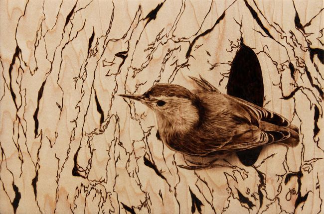 Photorealistic wood burning art of a bird by Julie Bender