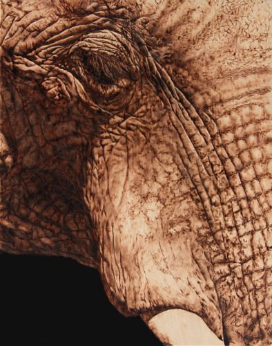 Photorealistic portrait of an elephant by wood burning artist Julie Bender