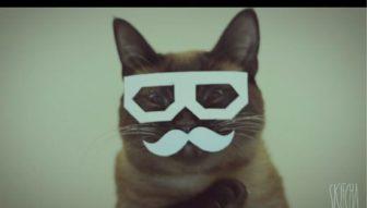 skifcha the cat