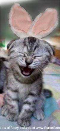 cute kitten laughing easter bunny picture photo funny humor