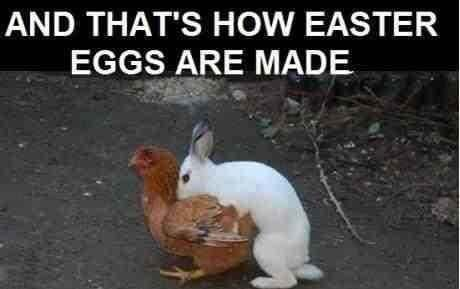 how easter eggs are made bunny humping chicken chocolate funny