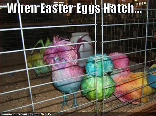 when easter eggs hatch funny humor painted chicken color