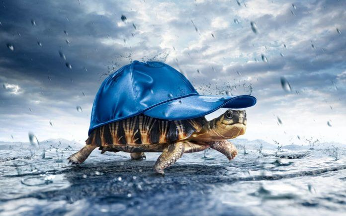 fun in the rain turtle tortoise in a hat life inspiration motivation fun funny cute picture image