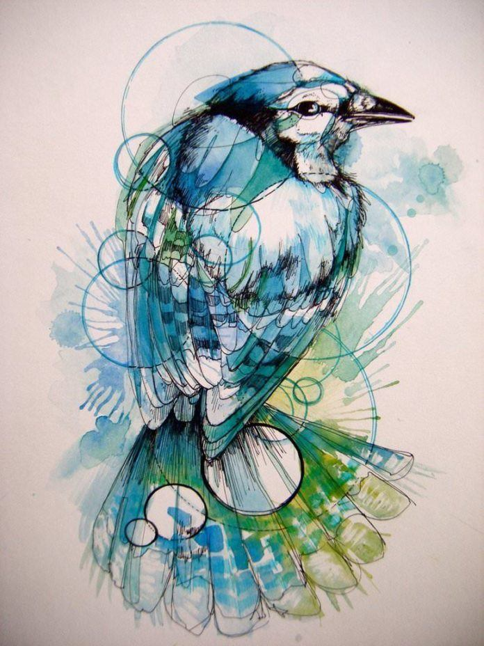 nature geometry bird circles shapes color drawing painting art illustration wings patterns