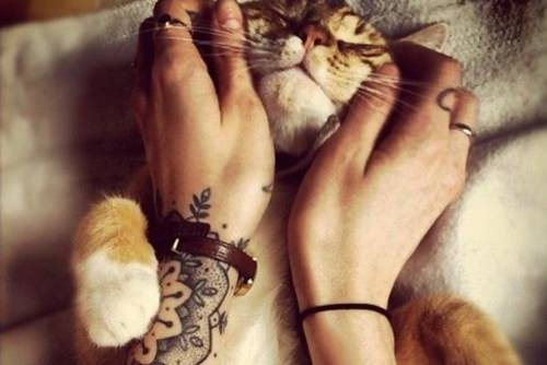 cat gets a smiley face tickle cute friends hands mehndi tattoo inspirational image love life