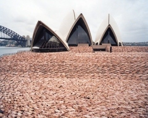 One of Spencer Tunick's mass nude photographs that uses thousands of volunteers to create a naked sea around the Sidney Opera House