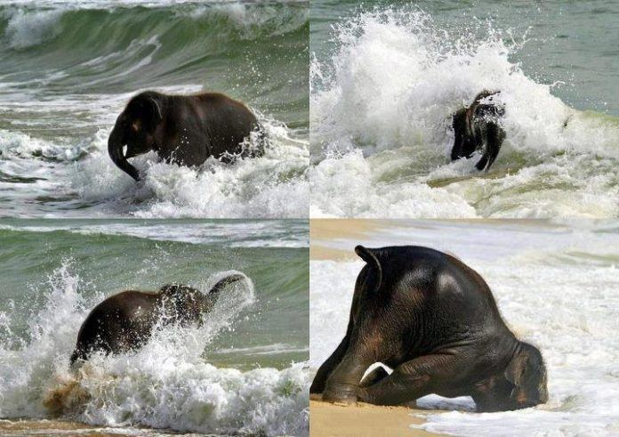 baby elephant having fun on the beach inspiration motivation cute picture image animal nature