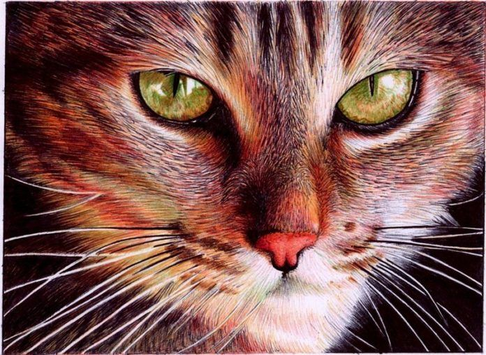 A photorealistic drawing in ballpoint pen by Samuel Silva of a housecat with green eyes