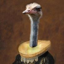 Painting by Angela Rossi of an ostrich wearing a Rennaissance collar and hand made lace