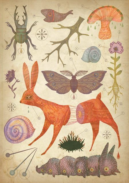 A biology diagram drawing by Vladimir Stankovic of a bunny, caterpillar and other creatures