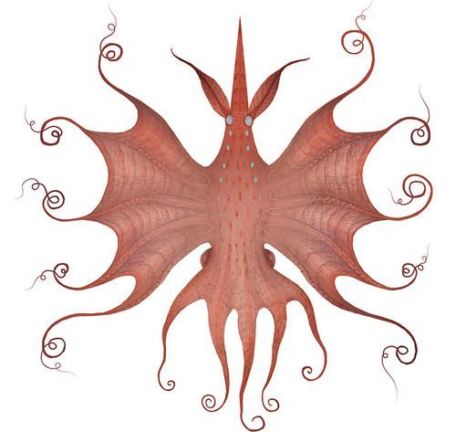 A drawing by Vladimir Stankovic of a butterfly squid octopus creature