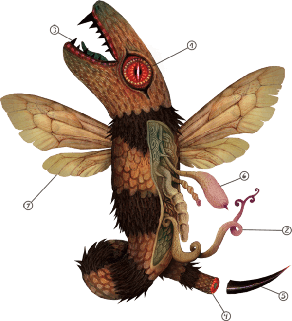 A scientific diagram drawing by Vladimir Stankovic of a fantasy winged serpent creature