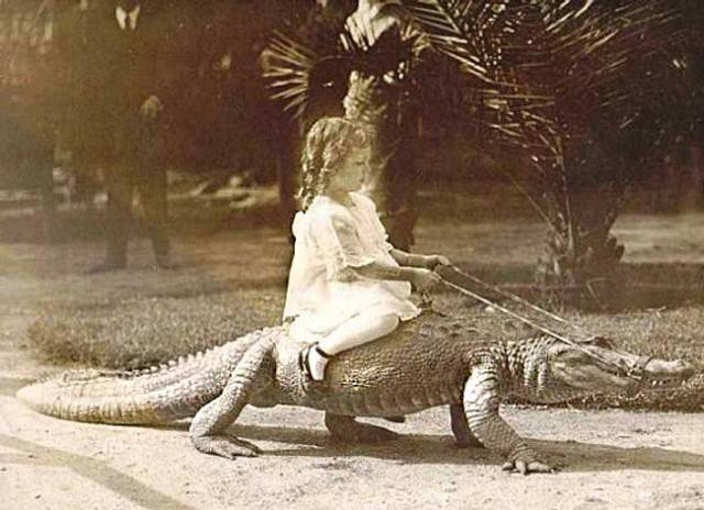 An antique photo of a little girl riding an alligator