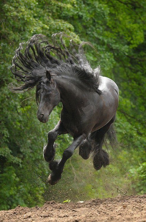 A beautiful photograph of a running horse with its mane flared