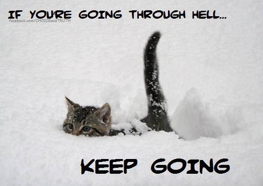 A cute kitten walks through deep snow in this inspirational picture quote