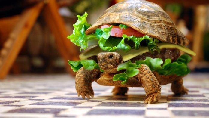 A funny photoshop piture of a turtle burger food animal hybrid
