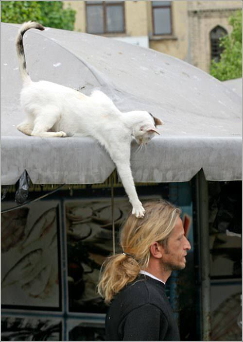 Funny picture of a cat clawing a guys hair