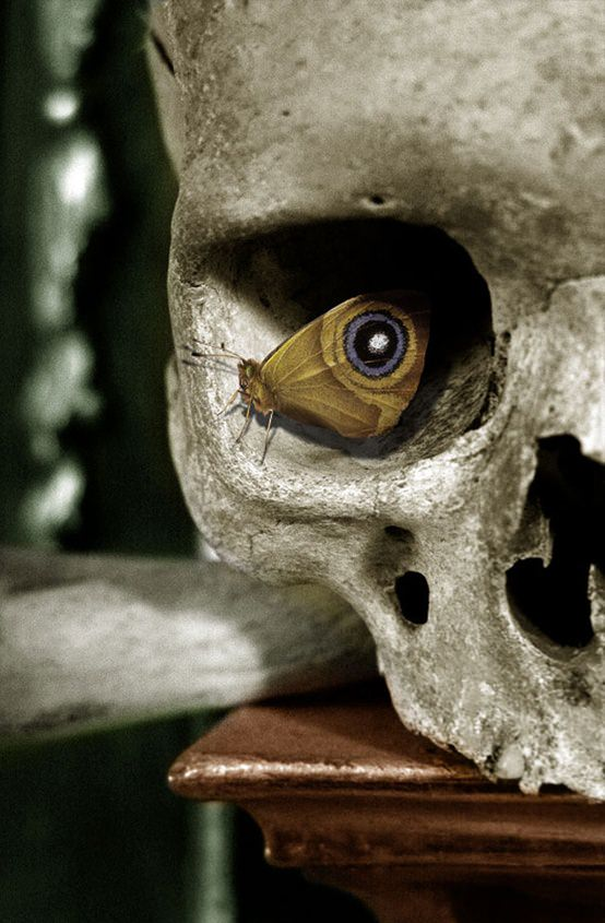 A butterfly perches in the eye socket of a human skull, creating the illusion of an eye