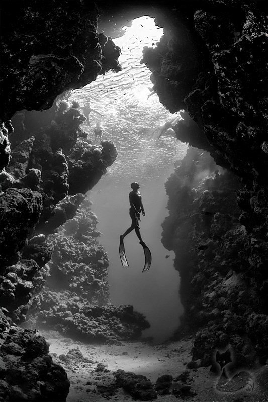 A beautiful black and white photograph of a diver among coral