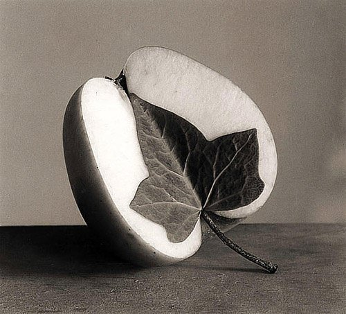 A clever photographer has combined and apple and an ivy leaf in this beautiful black and white photo