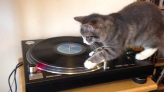 Cool Cat DJ