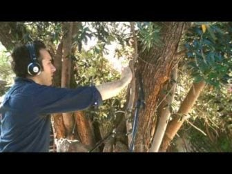 Diego Stocco plays Music From a Tree