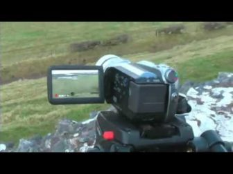 Extreme Sheperding: LED Sheep Art