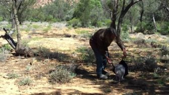How to Catch a Kangaroo