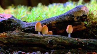 Louie Schwartzberg Reveals the Magic of Mushrooms in his Time Lapse Film