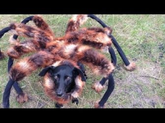 OMG!! Giant Mutant Spider Dog!!