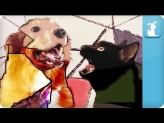 Some Doggy That I Used To Know – Gotye Parody Song