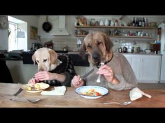 Two Dogs Eating with Human Hands