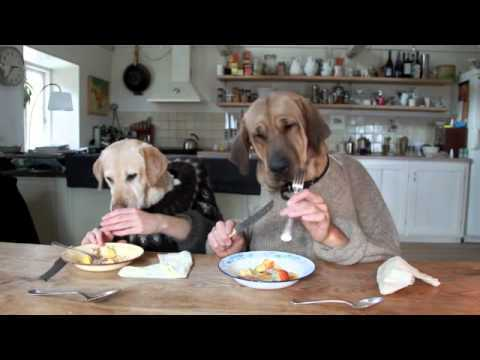 Dogs And Cat Eating Christmas Dinner