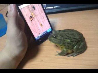 Video Gamer Frog gets his Revenge – Very Funny!