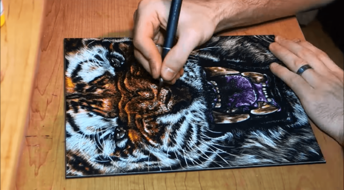 After coloring the exposed kaolin clay on the scratch board, Mackenzie Streutker can scratch into the freshly inked clay to reveal lighter or even white clay to add highlights and shine to the tiger