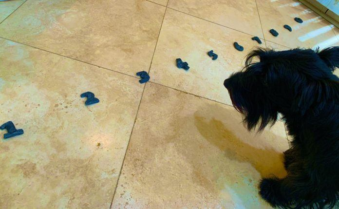 Stewie the math dog shows us his collection of well-chewed numbers that he plays his math games with.